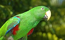 NHJC Paintings on Canvas,Green parrot,Canvas Wall