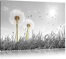 NOBRAND Print On Canvas Art The Picture Dandelions