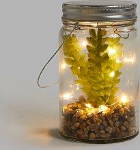 NOMA 10 LED Succulent Jar