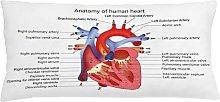 Oddi Educational Human Body Organ Outdoor Cushion