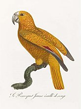 Orange Bird Vintage Illustration Large Wall Art