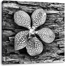 Orchid Blossom on Bark Art Print on Canvas East