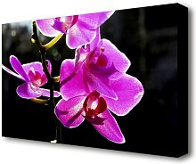 Orchid In Sunlight Flowers Canvas Print Wall Art