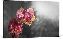 Orchid Photographic Art Print on Canvas East Urban