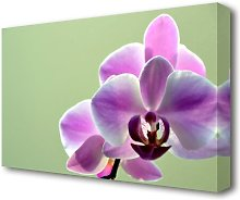 Orchid Pinks Flowers Canvas Print Wall Art East