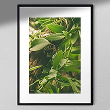 Orchid Plant - Plant Photography   Green Plant