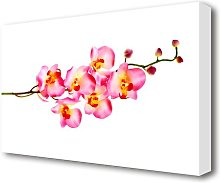 Orchid Stem Beauty Flowers Canvas Print Wall Art