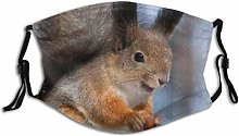 Outdoor Cover Animal Squirrel Eating Nut Furry
