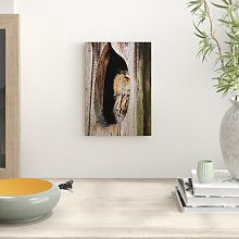 Owl Bird Photographic Print Big Box Art