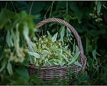 Paint by Number kit Flower Basket with Green