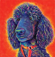 Paint by Numbers kit Poodle Dog Paint by Numbers