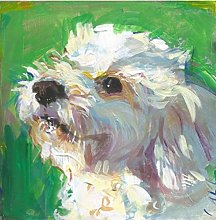 Paint by Numbers Kits Bichon Frise Dog Oil