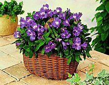 Paint by Numbers Purple Flower Basket for Adults