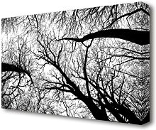 Pecan Grove Black And White Forest Canvas Print