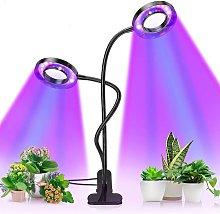 Perle Raregb - Plant Lighting, Plant Filling
