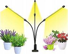 Perle Raregb - Planting Light, Gardening Light,