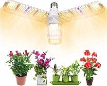 Perle Raregb - Successful Plant Lighting Plant