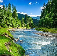 Photo Wallpaper for Walls Forest Stream Water