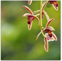 Pink Orchid Panicle Photographic Print on Canvas
