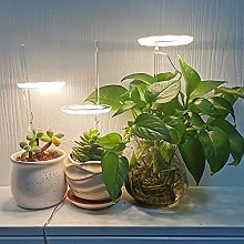 Pink Vale - Indoor Plant Angel Ring Grow Light