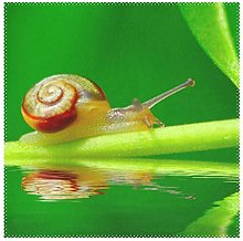 Placemats Snail On Green Leaf Garden Pool 12x12