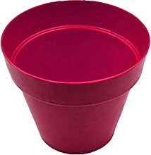 Plant Pot Bamboo - Ideal for Succulent plants,