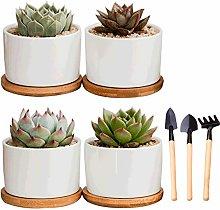 Plant Pot Flowerpot Garden Succulent Planter,