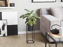 Plant Stand Black Iron15 x 15 x 40 cm Indoor