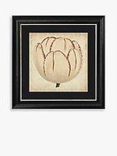 Pop Floral II Framed Print & Mount, 56 x 56cm,