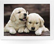 Portable Lap Desk Tray (Golden Retriever Puppies)