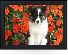 Portable Lap Desk Tray (Shetland Sheepdog Puppy)