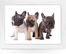 Portable Lap Desk Tray (Three French Bulldog