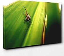 Premium Canvas Print (20x14 Inch / 50x35cm) Spider