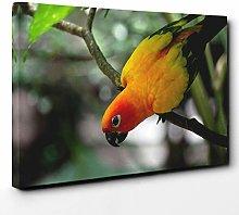 Premium Canvas Print (24x16 Inch / 60x40cm) Parrot
