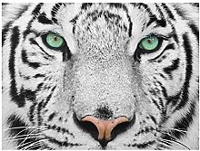 Print on Glass Wall Art - White Tiger - Cross 3:4