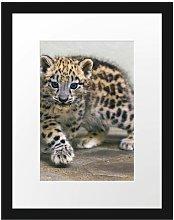 Proud Leopard Cub Framed Photographic Art Print