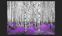 Purple Asylum 210cm x 300cm Wallpaper East Urban