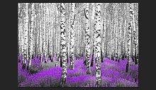 Purple Asylum 245cm x 350cm Wallpaper East Urban