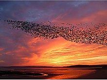Purple Orange Sunset Flock Birds Landscape Photo