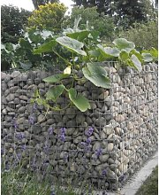 Raised garden , mesh size 5 cm, 100x50x100 cm,