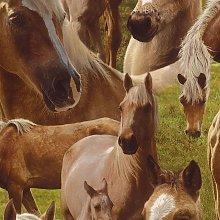 Rasch - Brown Horse Horses Pony Wallpaper Kids