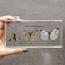 Real Insect Specimen In Crystal Clear Resin,Animal