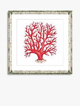 Red Coral 2 - Framed Print & Mount, 46 x 46cm, Red
