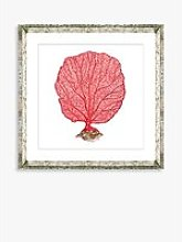 Red Coral 3 - Framed Print & Mount, 46 x 46cm, Red