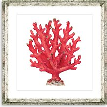 Red Coral 4 - Framed Print & Mount, 46 x 46cm, Red