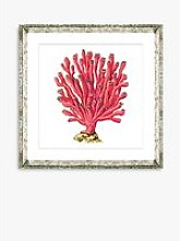 Red Coral 6 - Framed Print & Mount, 46 x 46cm, Red