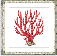 Red Coral 8 - Framed Print & Mount, 46 x 46cm, Red