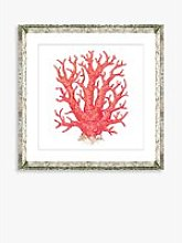 Red Coral 9 - Framed Print & Mount, 46 x 46cm, Red