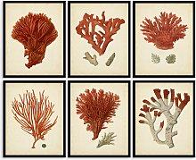 Red Coral - Framed Print & Mount, Set of 6, 32 x