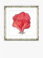 Red Coral I - Framed Print & Mount, 46 x 46cm, Red